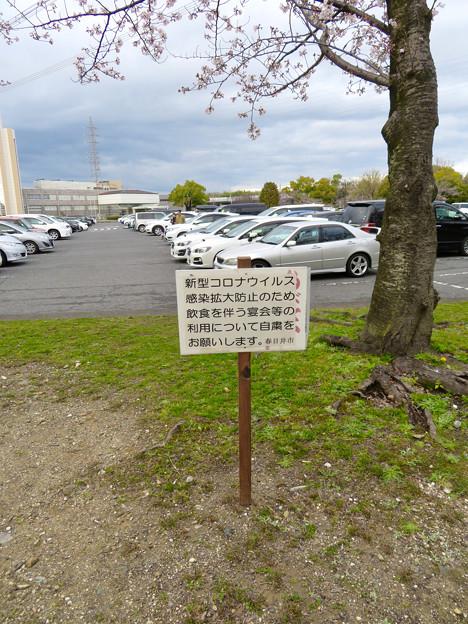 落合公園:コロナウイルス感染拡大防止で花見自粛のお願い - 3