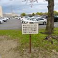 Photos: 落合公園:コロナウイルス感染拡大防止で花見自粛のお願い - 3