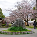 Photos: 落合公園の桜(2020年3月29日) - 3