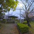 夕暮れから日没にかけての落合公園の桜(2020年3月30日)- 3