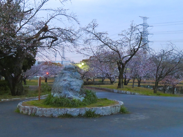 夕暮れから日没にかけての落合公園の桜(2020年3月30日)- 5