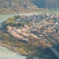 Photos: 猿啄城展望台から見た景色 - 43:木曽川沿いの桜