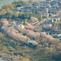 猿啄城展望台から見た景色 - 44:木曽川沿いの桜