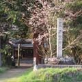 Photos: 平野神社 - 3
