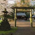 Photos: 平野神社 - 4