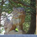 Photos: 平野神社 - 10:狛犬