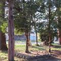 Photos: 平野神社 - 12:植えたばかりの神木