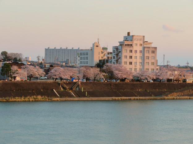 Photos: 木曽川沿いの桜