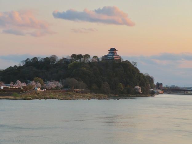 木曽川沿いの桜と犬山城 - 1