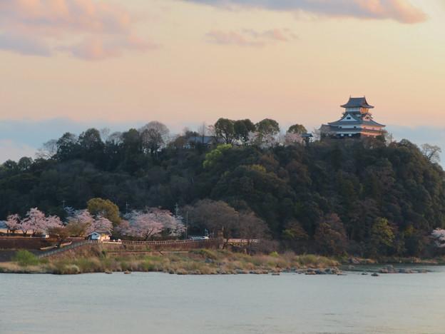 Photos: 木曽川沿いの桜と犬山城 - 2