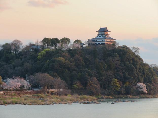 木曽川沿いの桜と犬山城 - 4