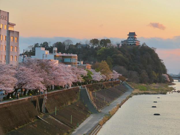 木曽川沿いの桜と犬山城 - 5