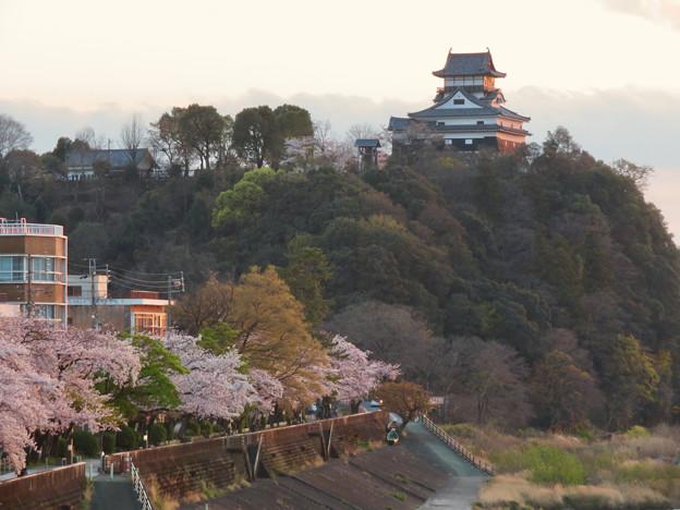 木曽川沿いの桜と犬山城 - 6