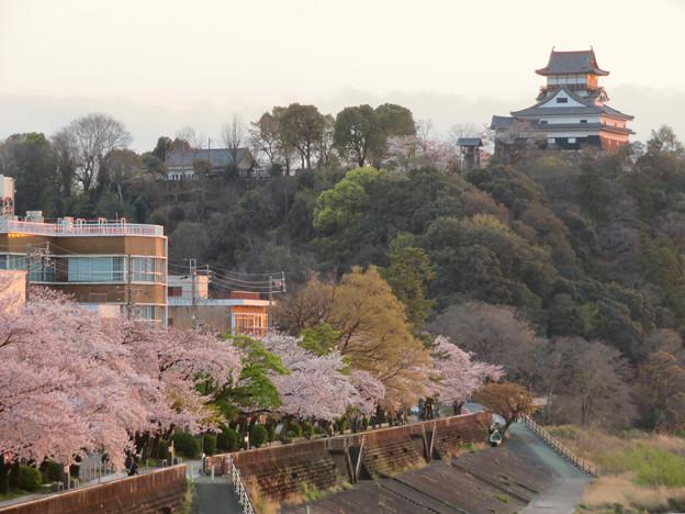 木曽川沿いの桜と犬山城 - 7