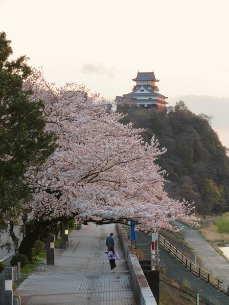 木曽川沿いの桜と犬山城 - 8