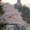 木曽川沿いの桜と犬山城 - 9