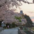 木曽川沿いの桜と犬山城 - 11