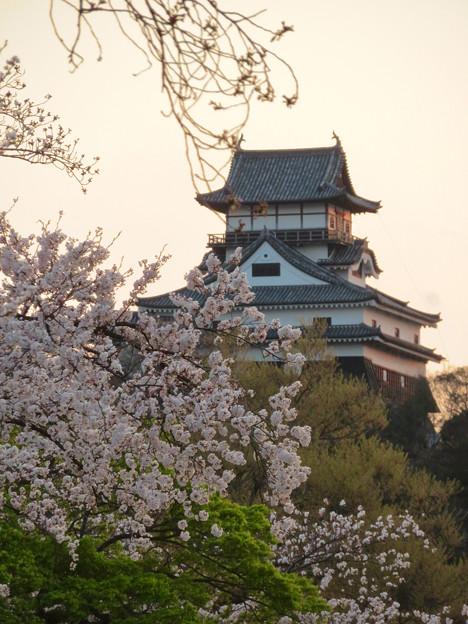 木曽川沿いの桜と犬山城 - 13