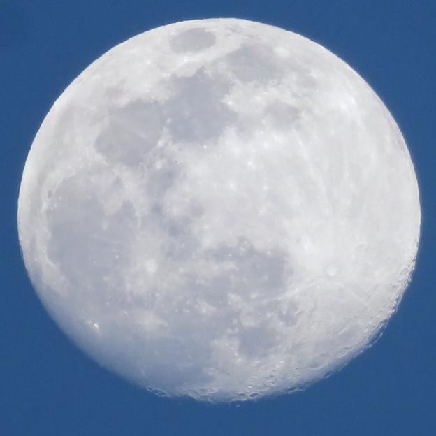 まだ空が青い時間帯に浮かぶ満月