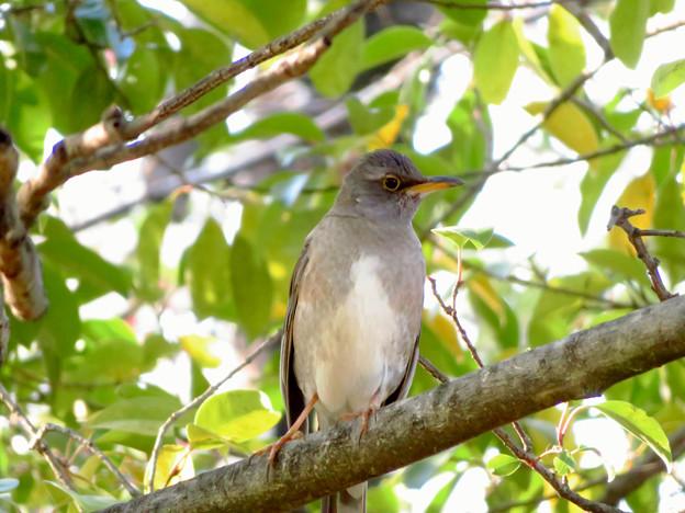 木の上にいた鳥 - 1