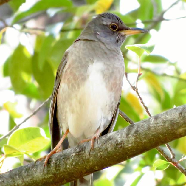 木の上にいた鳥 - 2