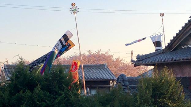 桜とともに棚引く鯉のぼり - 3