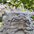 伊多波刀神社 - 9:狛犬