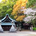 伊多波刀神社 - 15:本堂と桜