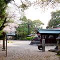 伊多波刀神社 - 25:境内と桜