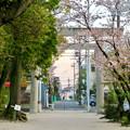 伊多波刀神社 - 38:参道沿いの桜と鳥居
