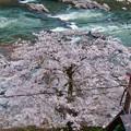定光寺駅近くにある桜 - 2
