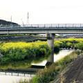 Photos: 内津川中洲の菜の花 - 4