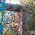 東海自然歩道から見上げた愛岐トンネル群第1・第2トンネル間を結ぶ保線道路となってる陸橋 - 1