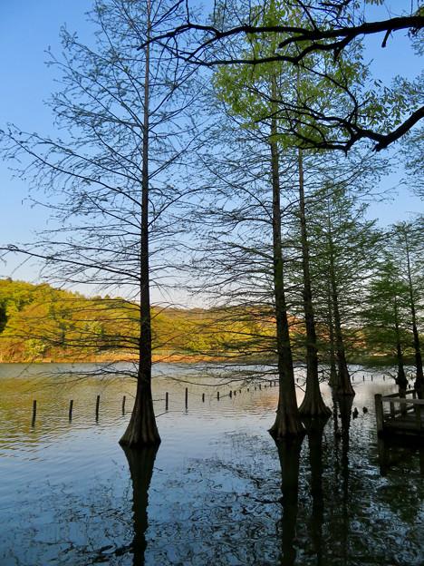 大久手池 - 10:木のシルエット