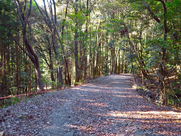 弥勒山 山頂への道 - 1