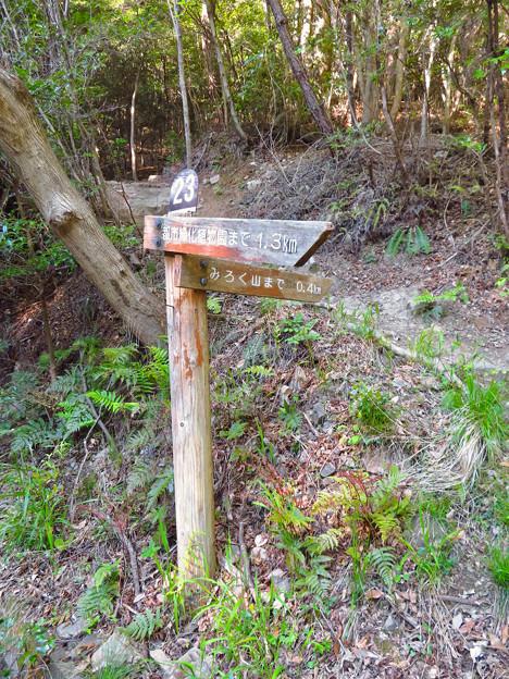 弥勒山 山頂への道 - 8:東海自然歩道春日井コース No.23 の分かれ道