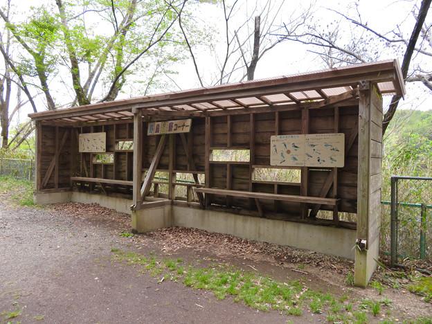 築水池 - 9:野鳥観察コーナー