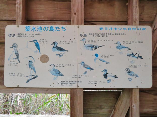 築水池 - 10:築水池で見られる鳥の説明