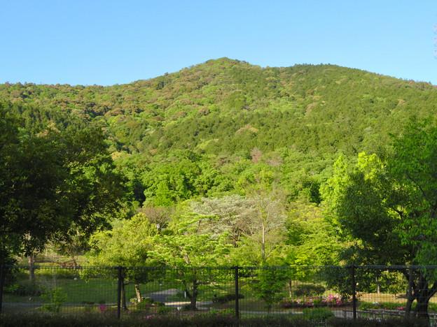 グリーンピア春日井越しに見上げた大谷山 - 1