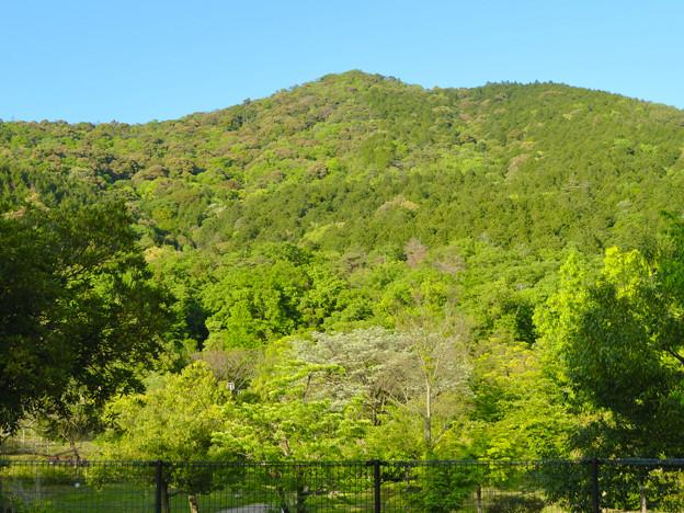 グリーンピア春日井越しに見上げた大谷山 - 2