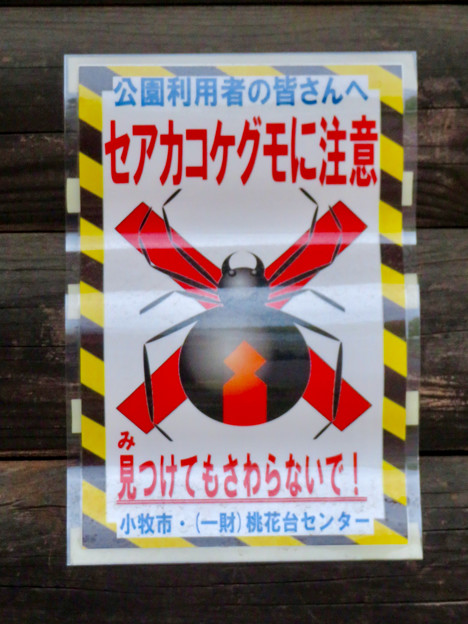 Photos: 桃花台中央公園に「セアカゴケグモ注意」の張り紙!?