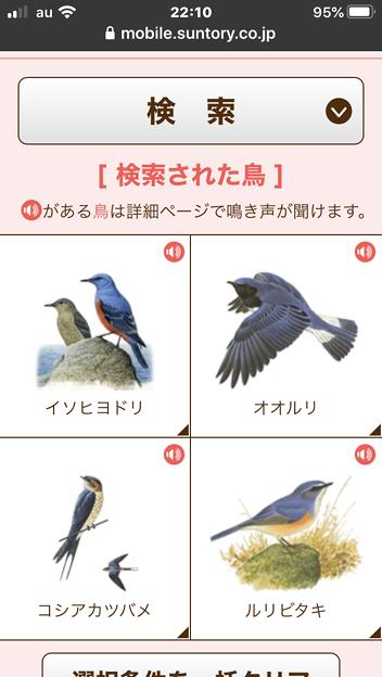 サントリーの愛鳥活動「日本の鳥百科」- 4:検索結果の一覧表示