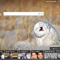 Photos: Bingトップページにユーモラスなシロフクロウの写真!w