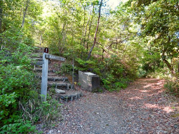 西高森山の登山道 - 1:登山道入口の「No.1」の分かれ道
