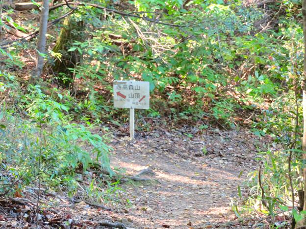 西高森山の登山道 - 10:山頂への案内板