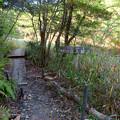 Photos: 築水池の周辺:湿地保護のため木の橋が作られてる場所 - 1