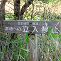 Photos: 築水池の周辺:湿地保護のため木の橋が作られてる場所 - 2