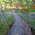 Photos: 築水池の周辺:湿地保護のため木の橋が作られてる場所 - 3
