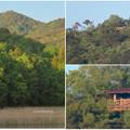 Photos: 宮滝大池から見た弥勒山の展望台 - 2