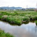 Photos: 内津川と大谷川の合流地点 - 2